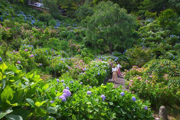 紫陽花の庭園 thumbnail