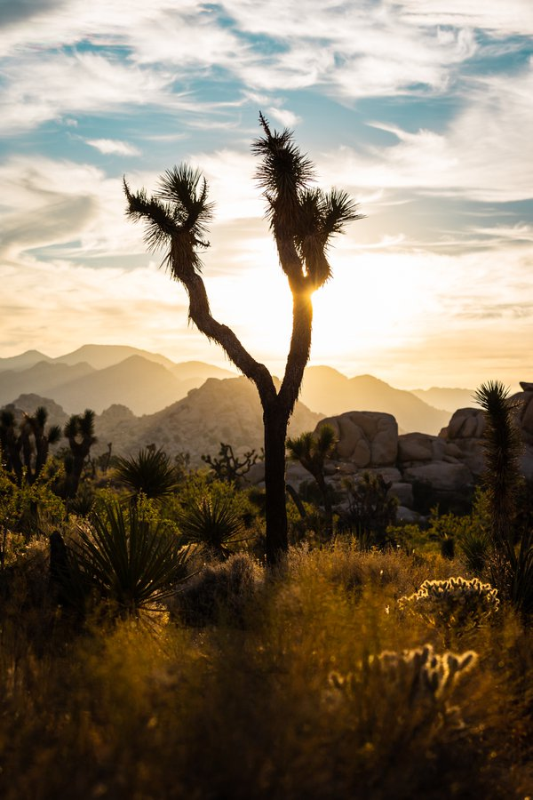 Sunset at Joshua Tree National Park thumbnail