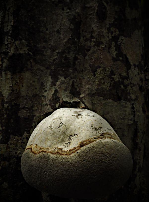Fungus thumbnail