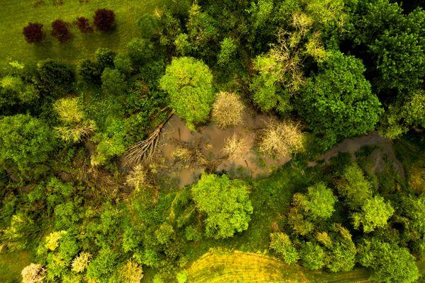 Aerial View of a Beaver Dam thumbnail