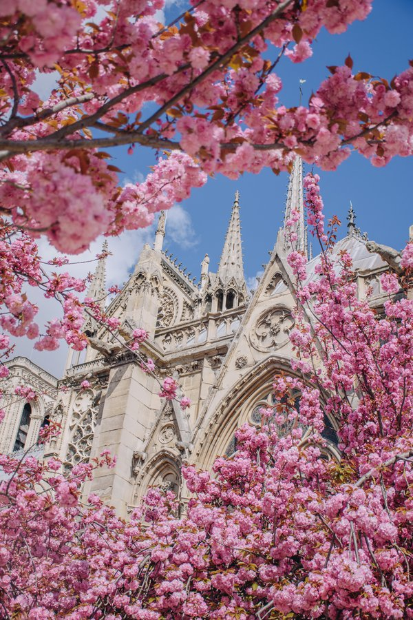 Notre Dame in Bloom thumbnail