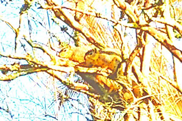 Squirrel couples thumbnail
