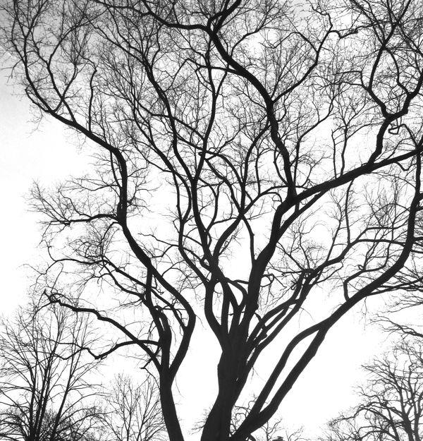 B/W Tree thumbnail