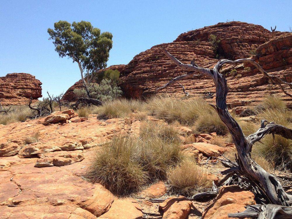 Western Desert Scene