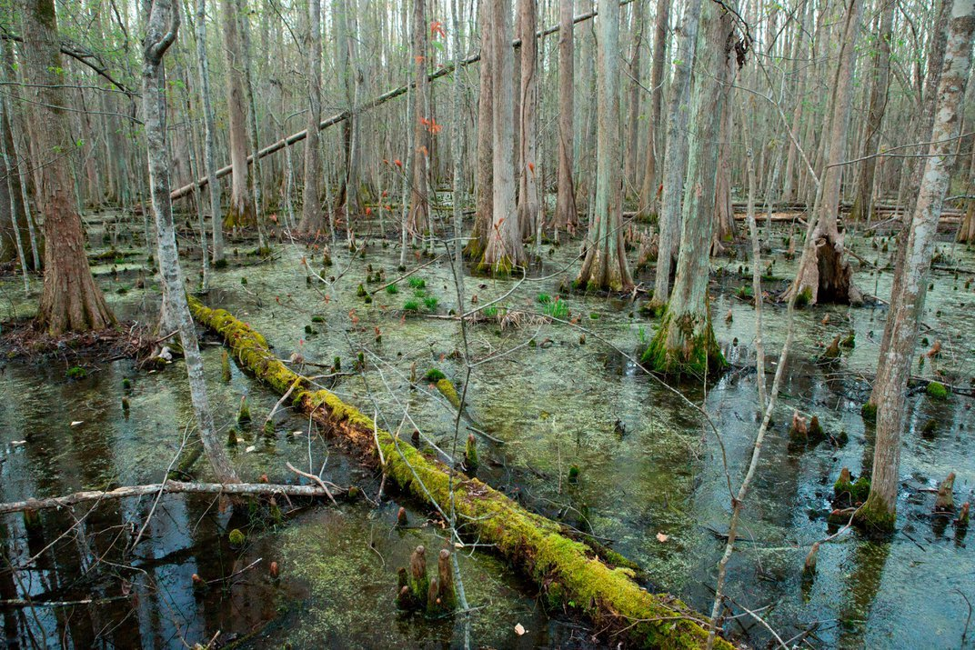 Deep in the Swamps, Archaeologists Are Finding How Fugitive Slaves Kept Their Freedom