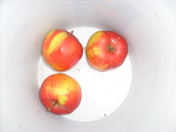 Last of the old orchard apples thumbnail