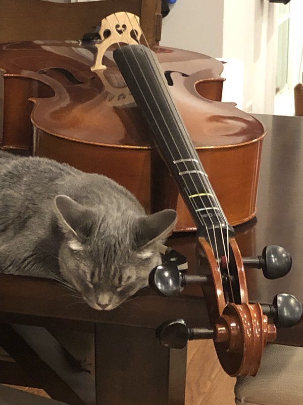 Cat sleeping next to cello thumbnail