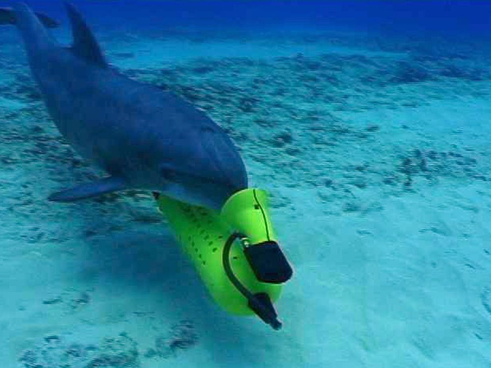 Mine Dolphin