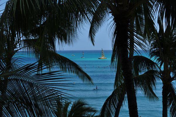 Waikiki palm trees thumbnail