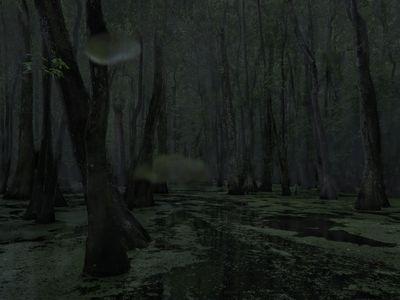 Cypress Swamp. Middle Mississippi, 2014