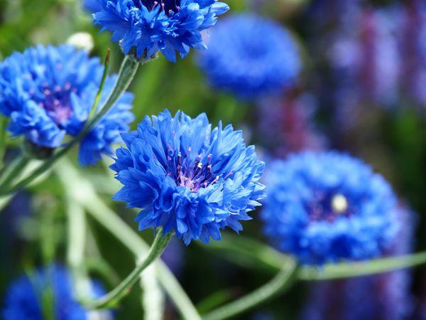Blue Fantasia thumbnail