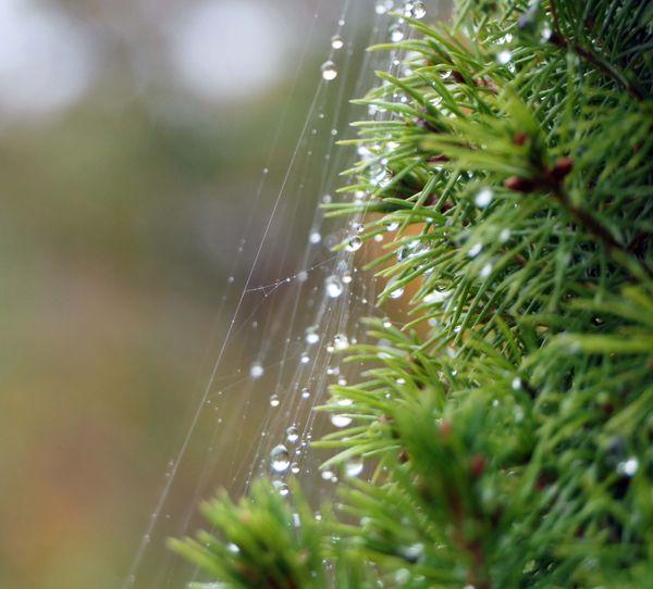 Dew on a tree thumbnail