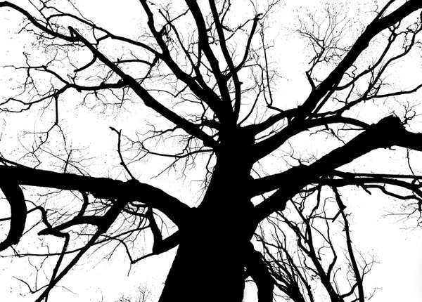 Branches thumbnail