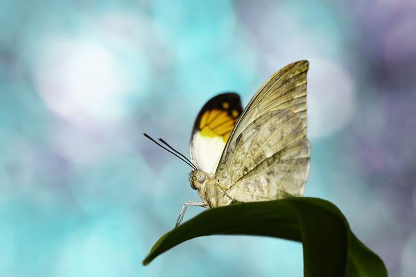 Orange tip butterfly macro shot thumbnail
