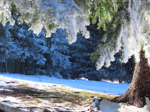 Very first snow in SHARR mountains, Republic of Kosovo thumbnail