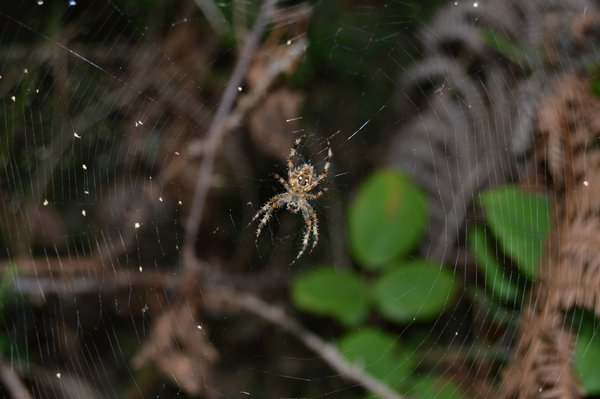 The spider in the center of her home thumbnail