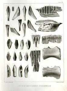 20110520083127hadrosaurus-lithograph-221x300.jpg