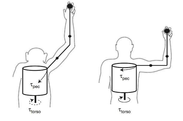 How the Human Body Evolved to Throw Fastballs