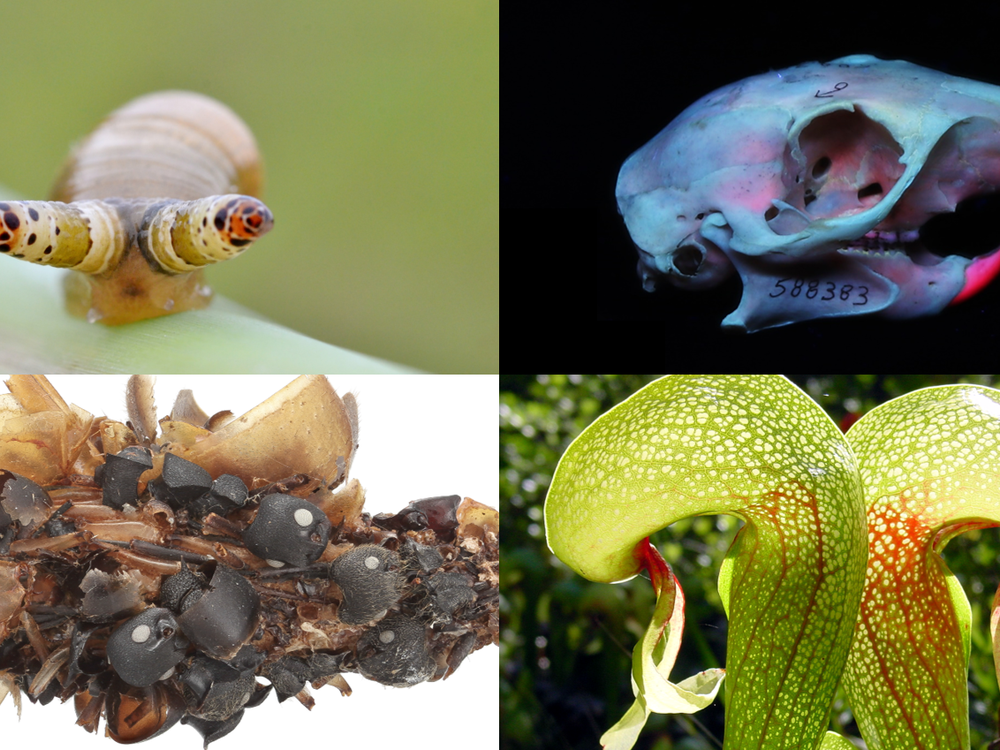 Collections at the Smithsonian's National Museum of Natural History are filled with all sorts of eerie specimens. (Clockwise from top left: Gilles San Martin via Wikimedia, Smithsonian Institution, NoahElhardt via Wikimedia, Karie Darrow)