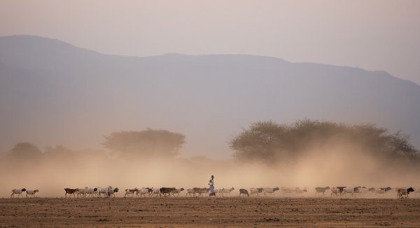 Maasai shepard thumbnail
