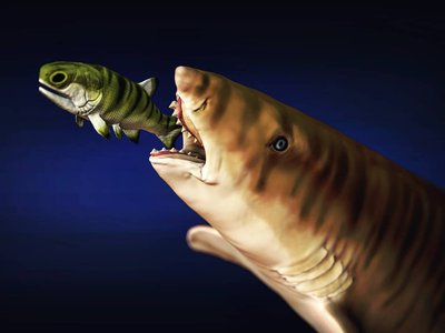 With just two rows of teeth, Edestus slid its lower jaw to slice apart its prey.