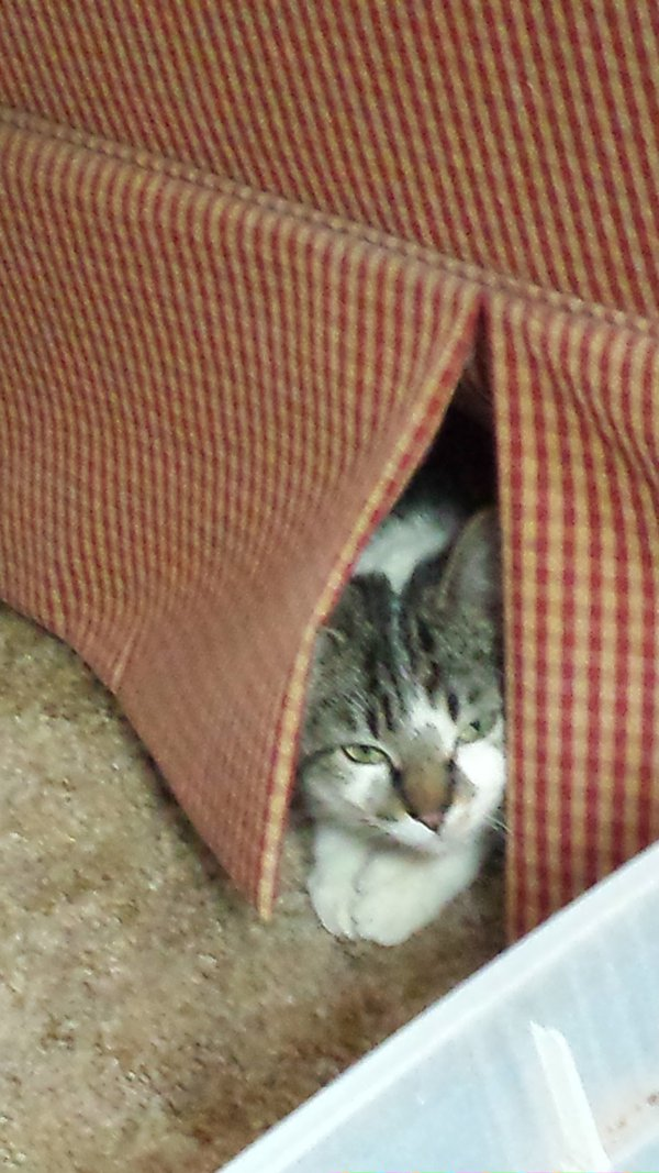 Cat peeking out from under sofa thumbnail