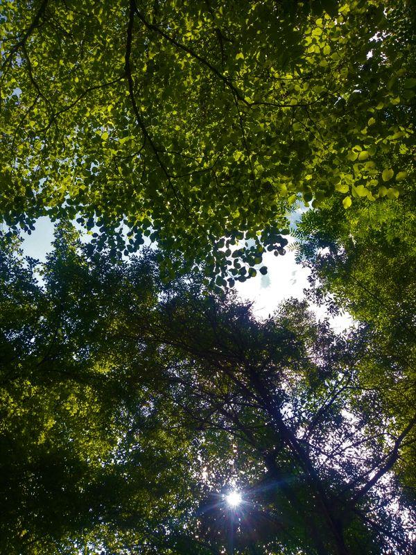 sun light thumbnail