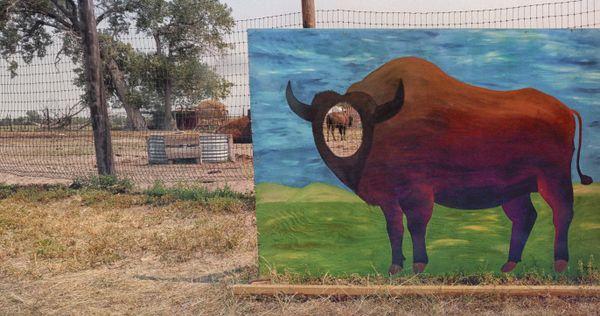Not-So-Green Pastures thumbnail