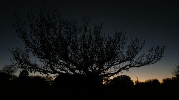 Twilight behind a tree. thumbnail