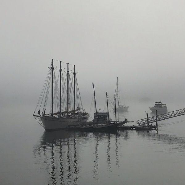 Foggy day in Bar Harbor, Maine thumbnail