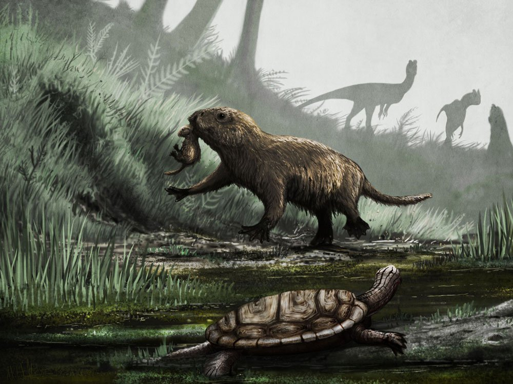 Early Mammal