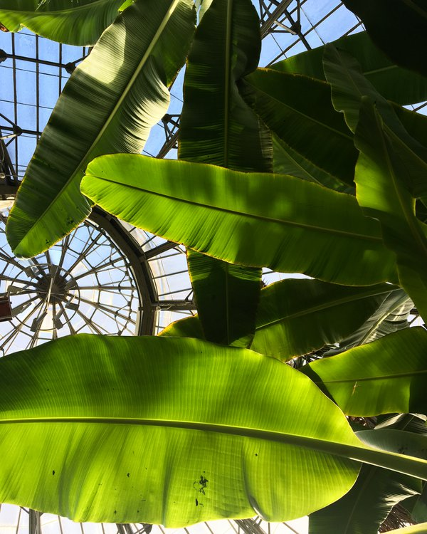 Allan Gardens Conservatory thumbnail