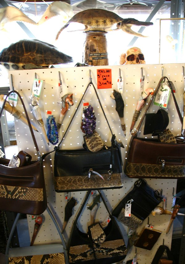 A collection of rattlesnake skin purses for sale at Rattlesnake Ranch, a Southeastern Arizona novelty shop. thumbnail