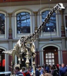 20110520083126diplodocus_carnegiei-267x300.jpg
