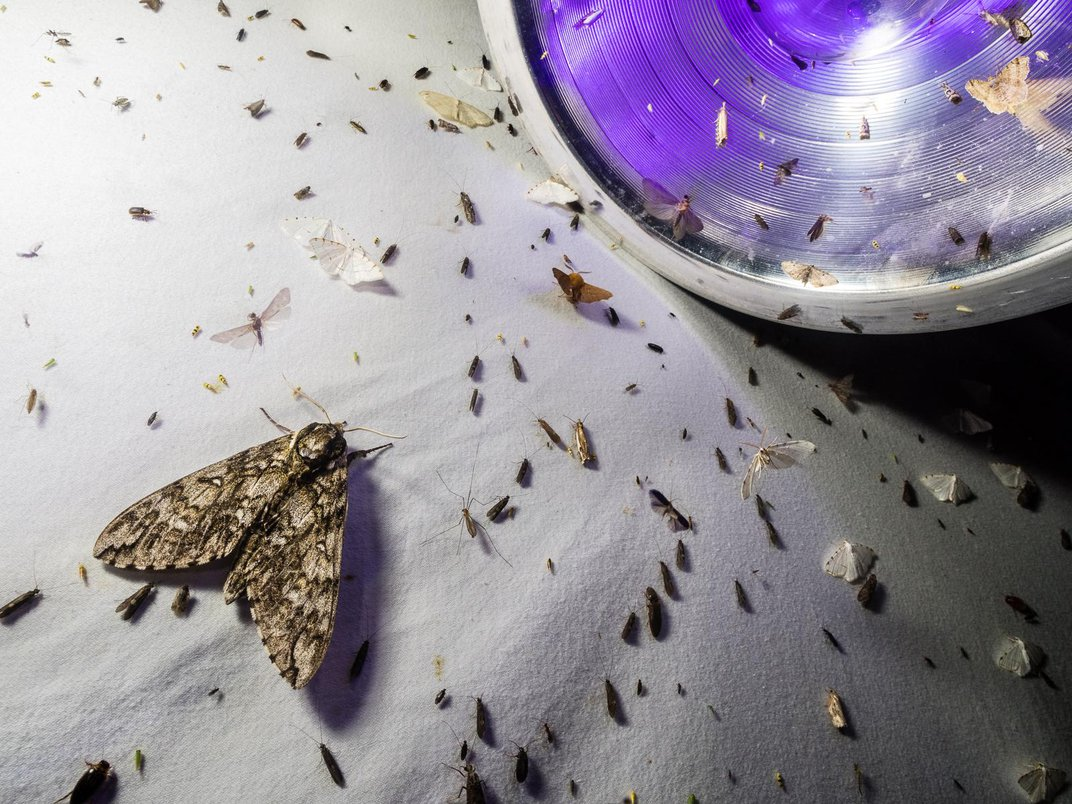 These Moths Are So Gorgeous They 'Put Butterflies to Shame'