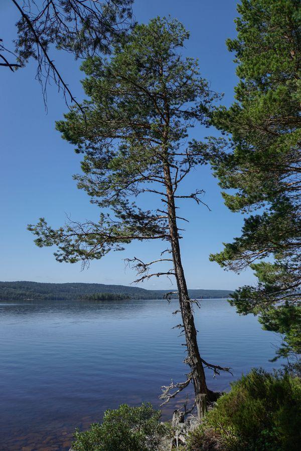 Scandinavian Solitude thumbnail