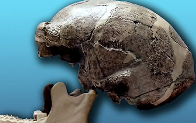 A replica of one of the Peking Man skulls