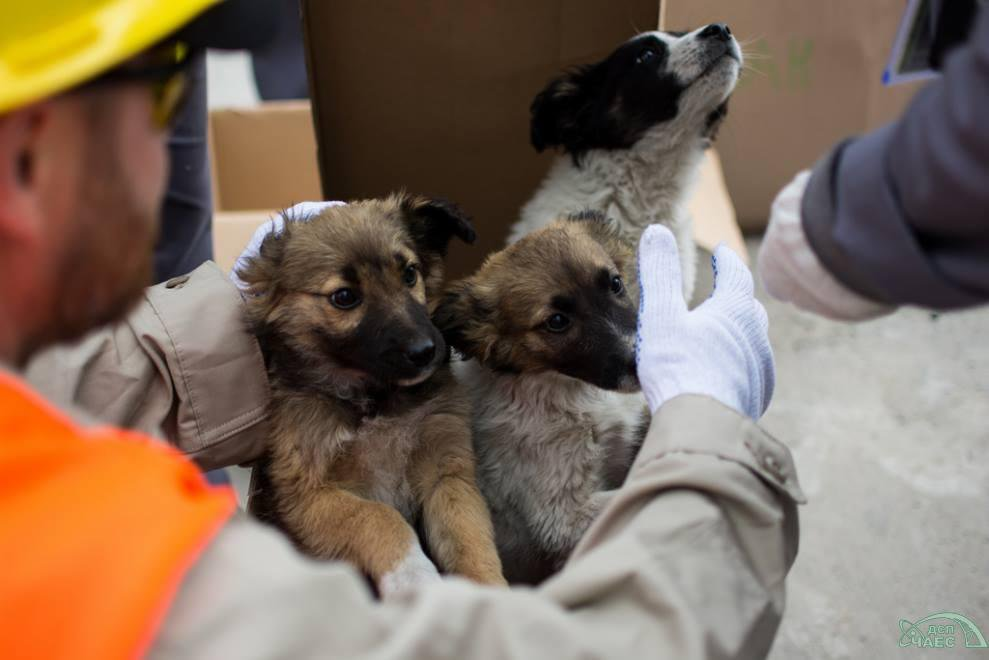 Chernbobyl Puppies