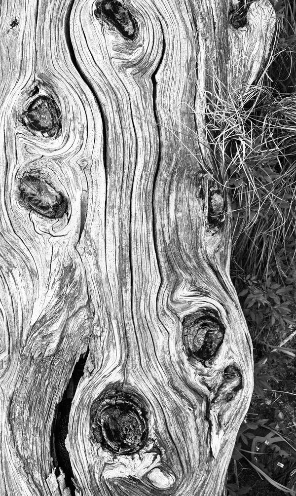 Weathered Log thumbnail