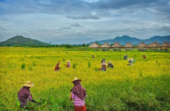 Searching rice seeds thumbnail