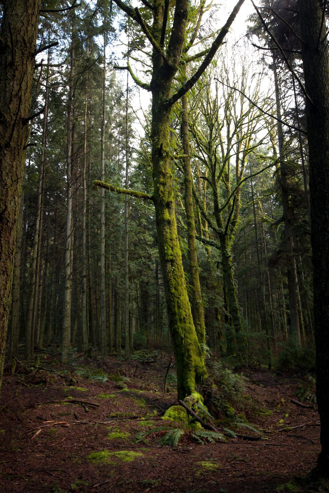 Do Trees Talk to Each Other?