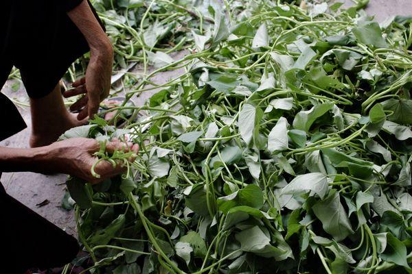 A Buddhist Nun Prepares Herbs for Phở thumbnail