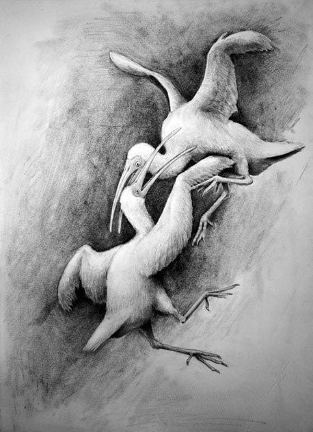 Xenicibis xympithecus