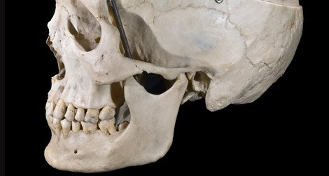 Humans are the only hominids with true chins.