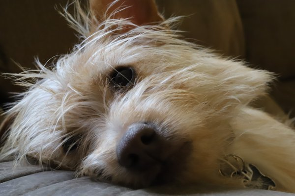 Dog's Life! thumbnail
