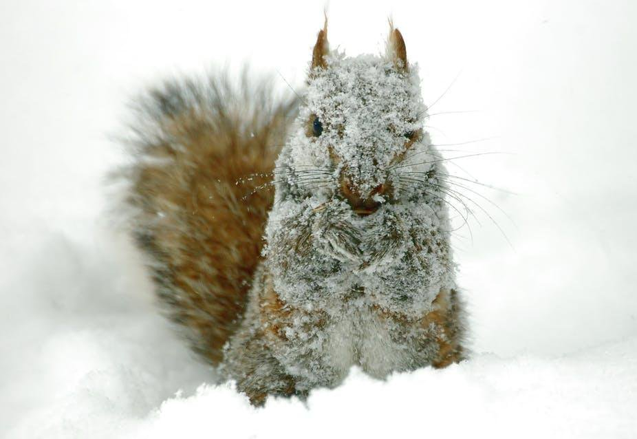Chilly Squirrel
