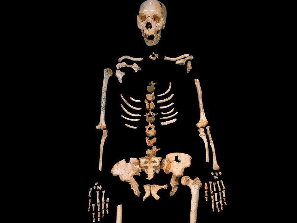 Homo_heidelbergensis.jpg