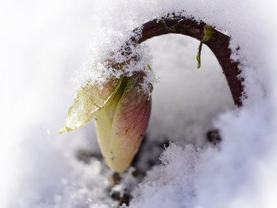 Plants and animals around the globe use a wide variety of evolutionary strategies to survive harsh winters.