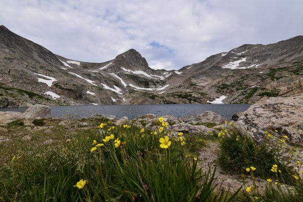 Blue Lake Flowers thumbnail