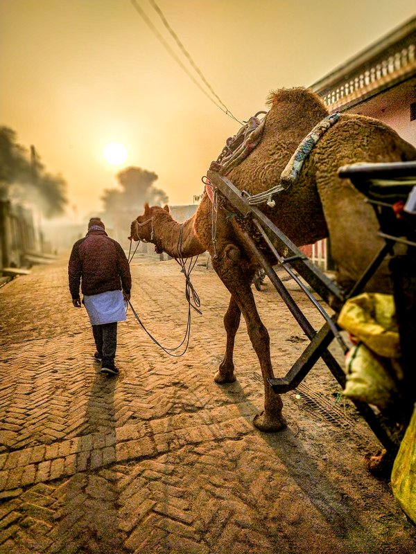 The camel traveller come in my village for selling her spices. thumbnail